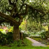 Crabapple Tree Garden